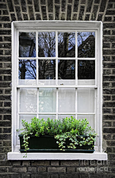 Wall Art - Photograph - Window In London by Elena Elisseeva