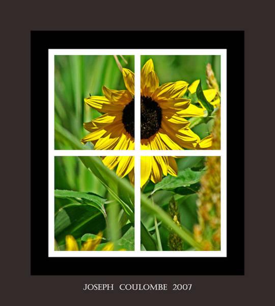Digital Art - Window Sun Flowers by Joseph Coulombe