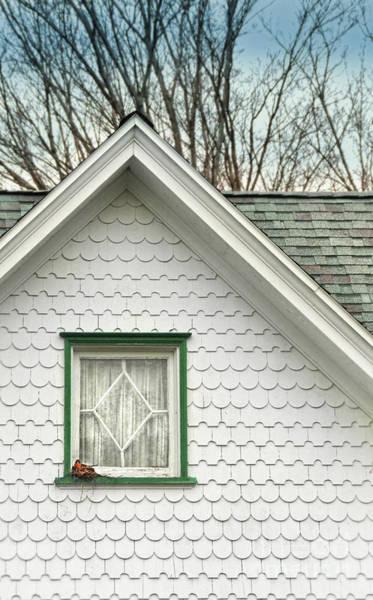 Wall Art - Photograph - Window With Robin's Nest by Jill Battaglia