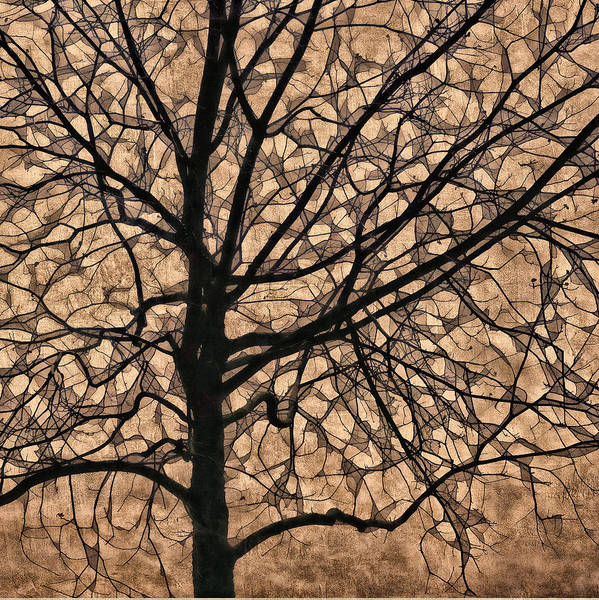 Wall Art - Photograph - Windowpane Tree In Autumn by Carol Leigh
