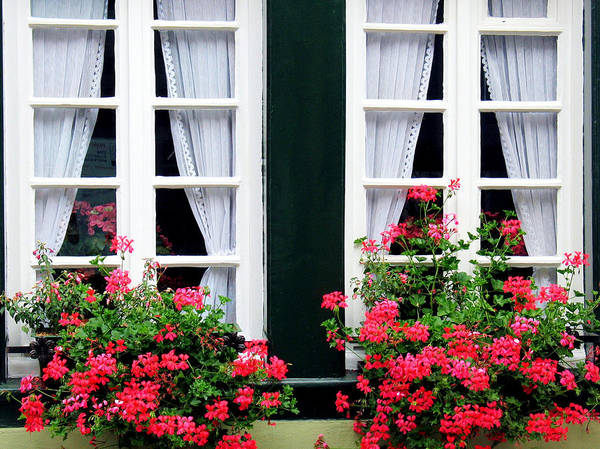 Photograph - Windows And Ivy Geranium by Gerry Bates