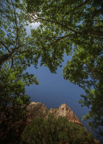 Photograph - Windows In Zion by Dwight Theall
