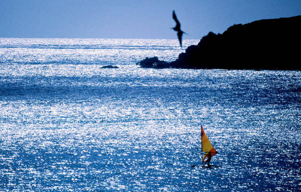 Windsurfing Photograph - Windsurfer In The Sea, Sint Maarten by Panoramic Images
