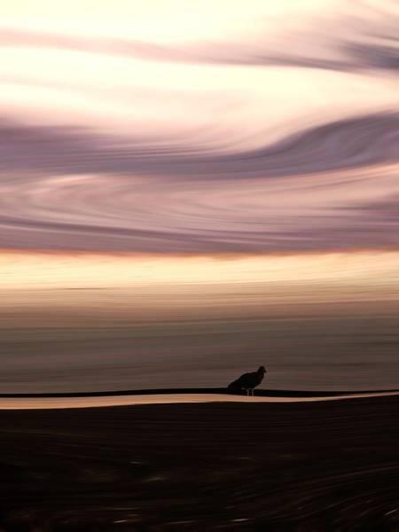 Liquify Photograph - Windswept 2 by Sharon Lisa Clarke