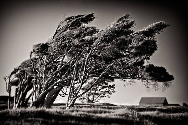 Wall Art - Photograph - Windswept by Dave Bowman