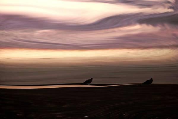 Liquify Photograph - Windswept by Sharon Lisa Clarke