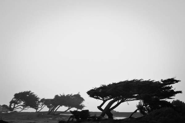 Photograph - Windswept Shoreline by Melinda Ledsome
