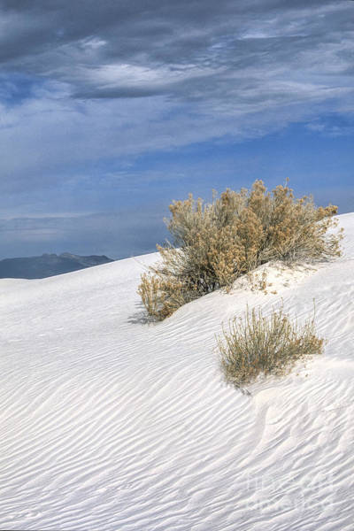 Wall Art - Photograph - Windswept - White Sands National Monument by Sandra Bronstein