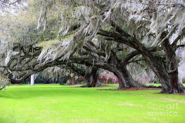 Photograph - Windy Day In Charleston by Carol Groenen