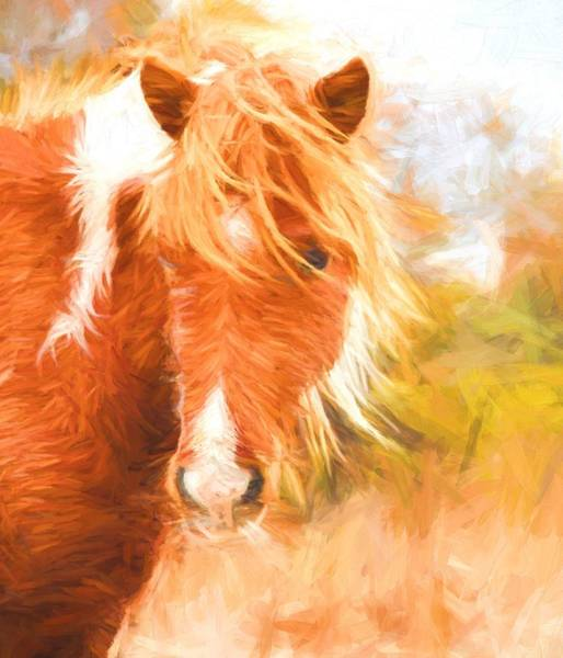 Photograph - Windypony by Alice Gipson