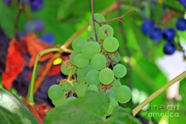 Photograph - Wine Beginnings by Tap On Photo