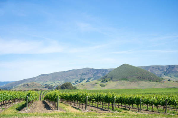 Photograph - Wine Country Edna Valley by Priya Ghose