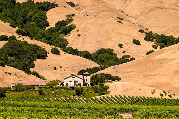 Photograph - Wine Country by Paul Johnson