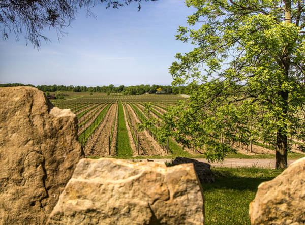 Photograph - Wine Estate Ontario by Nick Mares