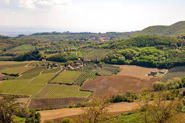 Wine Fields In Tuscany Art Print by Jakob Montrasio