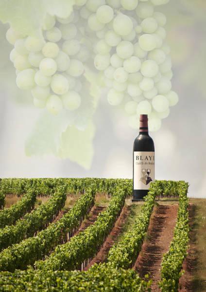 Photograph - Wine by Gouzel -