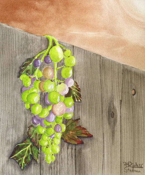 Painting - Wine On The Vine by Rich Stedman