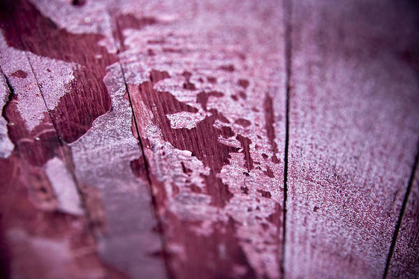Wall Art - Photograph - Wine Red by Frank Tschakert