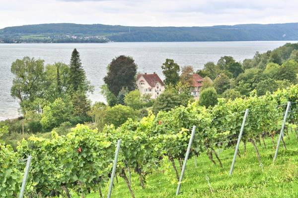 Photograph - Winery On Lake Constance by Gordon Elwell