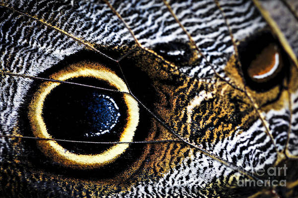Wall Art - Photograph - Wing Of Owl Butterfly  by Elena Elisseeva