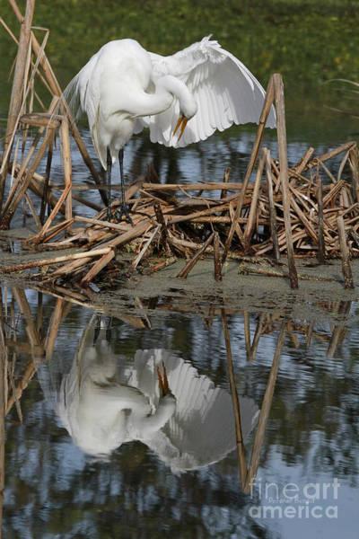 Photograph - Wing Up Reflection by Deborah Benoit