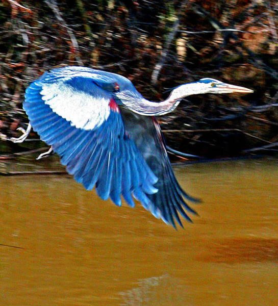 Photograph - Wings In Flight by Joseph Coulombe