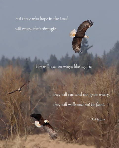 Flying Eagle Photograph - Wings Like Eagles by Angie Vogel