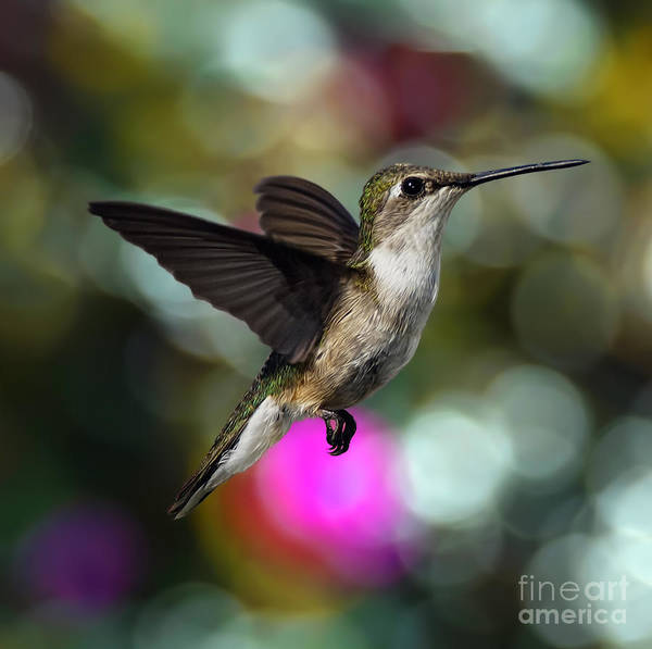 Wall Art - Photograph - Wings On Bokeh by Scarlett Images Photography
