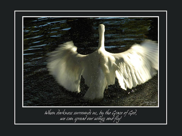 Photograph - Wings To Fly by Carolyn Marshall