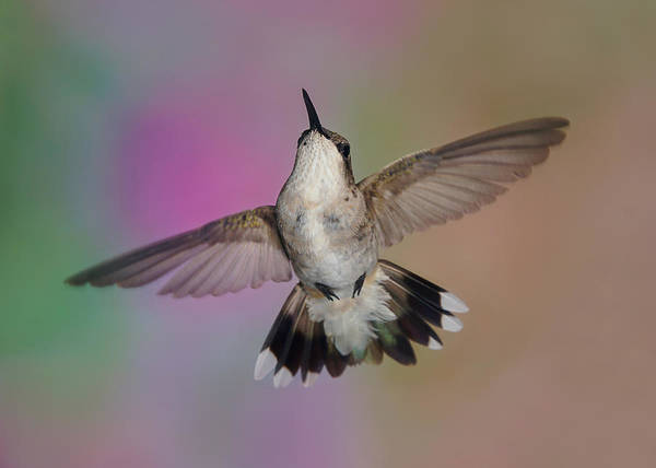 Photograph - Wingspread by Leda Robertson
