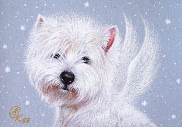 Drawing - Winter Angel - Westie by Elena Kolotusha