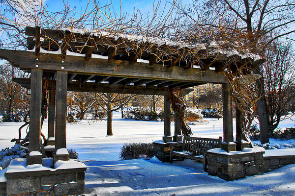 Photograph - Winter Arbor by Alice Gipson