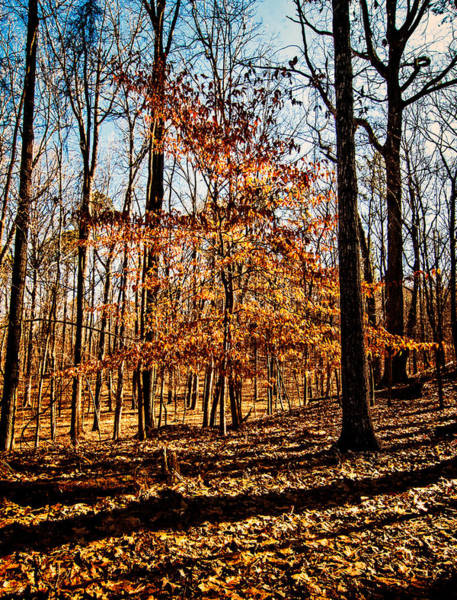 Photograph - Winter At Oak Mountain State Park by Andy Crawford
