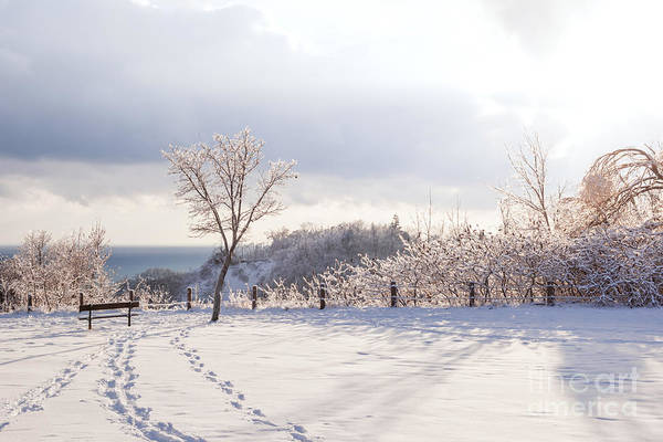 Wall Art - Photograph - Winter At Scarborough Bluffs by Elena Elisseeva
