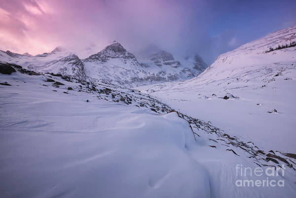 Photograph - Winter At The Columbia Icefields by Dan Jurak
