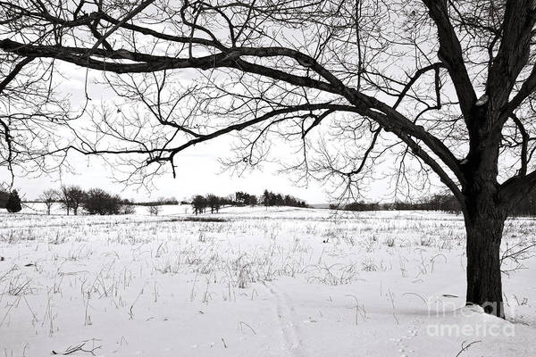 Forge Wall Art - Photograph - Winter At Valley Forge by Olivier Le Queinec