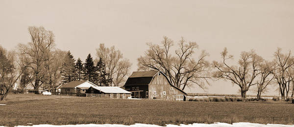 Digital Art - Winter Barren by Kirt Tisdale