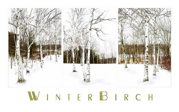 Photograph - Winter Birch by Robin-Lee Vieira