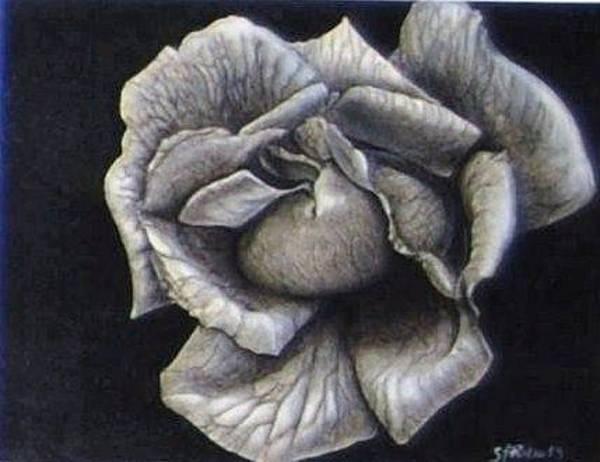 Organic Gardening Drawing - Winter Bloom by Susan L Sistrunk