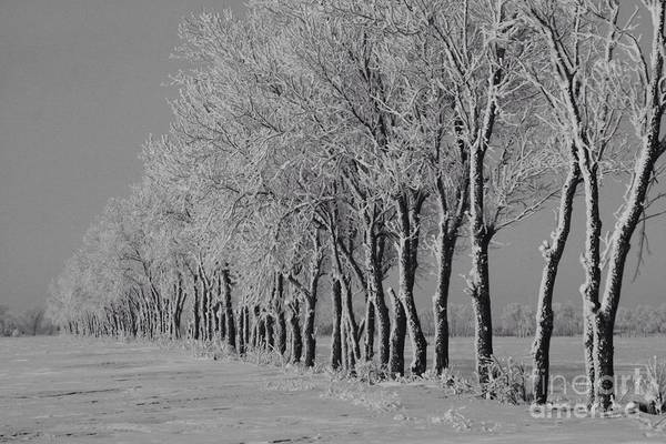 Disappearance Photograph - Winter Blow by John Thode