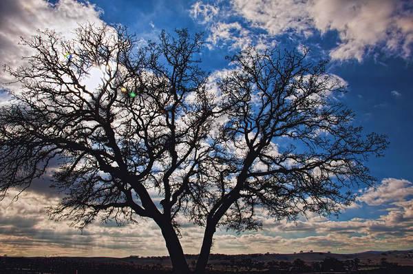 Photograph - Winter Blue Skys by Bill Dodsworth
