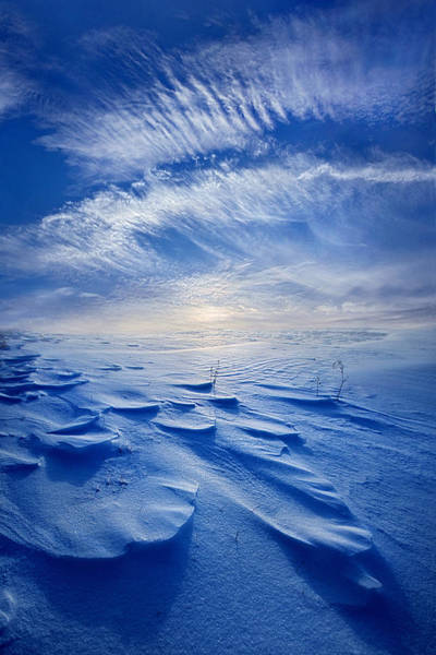Blue Angels Photograph - Winter Born by Phil Koch