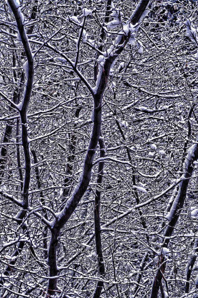 Photograph - Winter Branches by Garry Gay
