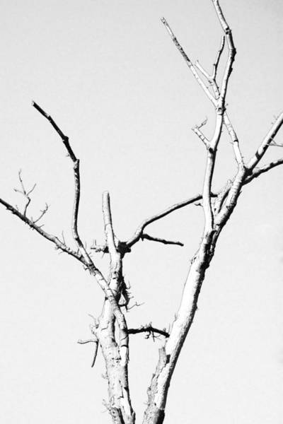 Photograph - Winter Branches  by Maggy Marsh