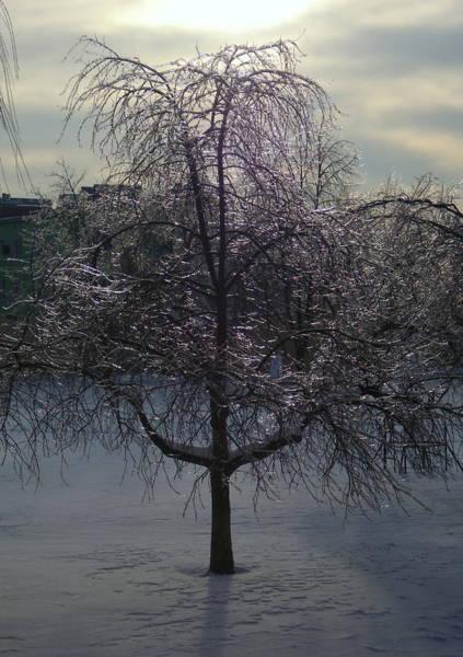 Gorecki Photograph - Winter Candelabrum by Henryk Gorecki