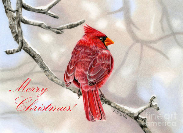 Colored Pencil Drawings Painting - Winter Cardinal- Merry Christmas Cards by Sarah Batalka