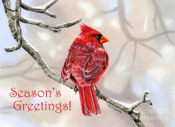 Colored Pencil Drawings Painting - Winter Cardinal- Seaon's Greetings Cards by Sarah Batalka