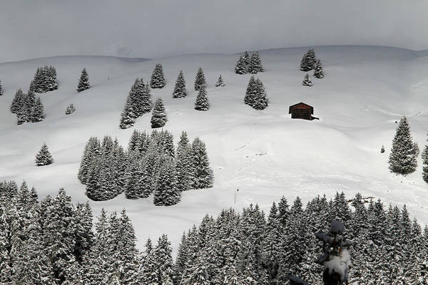 Chalet Photograph - Winter Chalet Amidst The Trees On Snowy by Gerhard Fitzthum