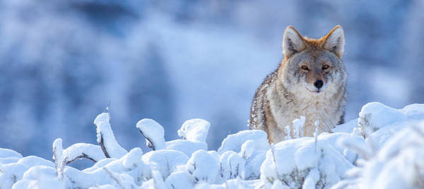 Photograph - Winter Coat by Kevin  Dietrich
