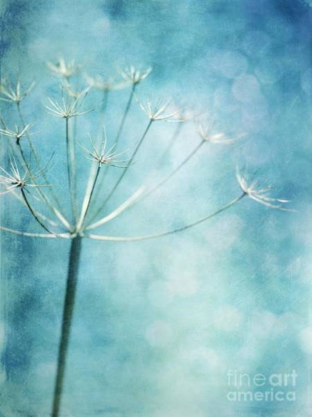 Relics Photograph - Winter Colors by Priska Wettstein